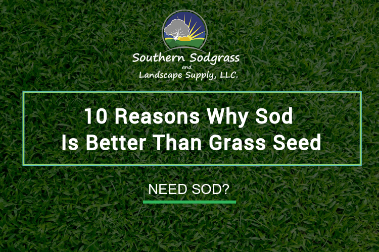 Why is sod better than grass seed?