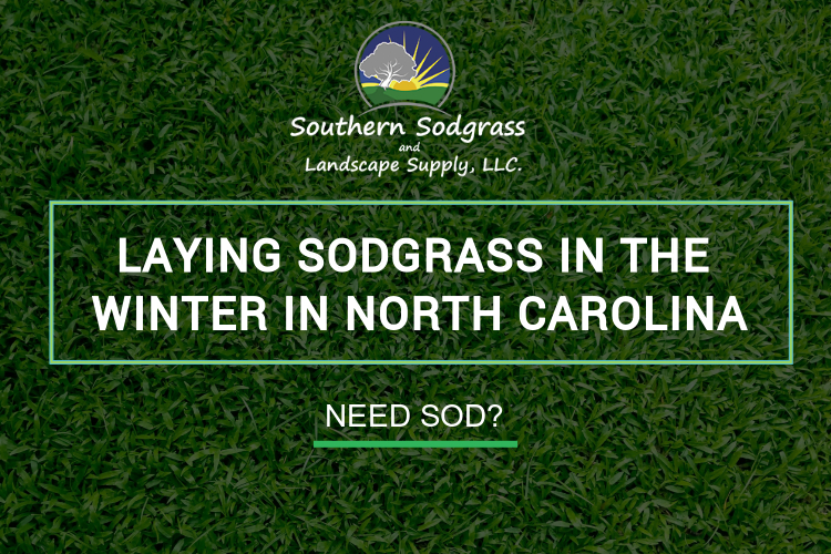 Laying sodgrass in the winter in North Carolina