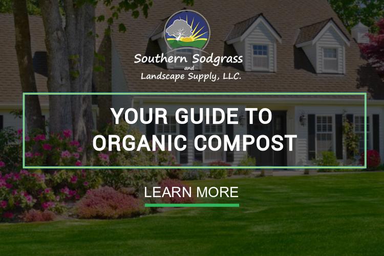 Southern Sodgrass