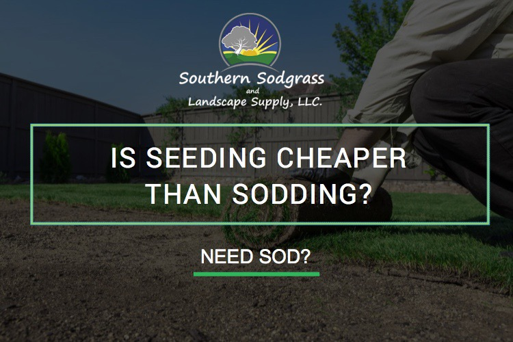 Is Seeding cheaper than sodding